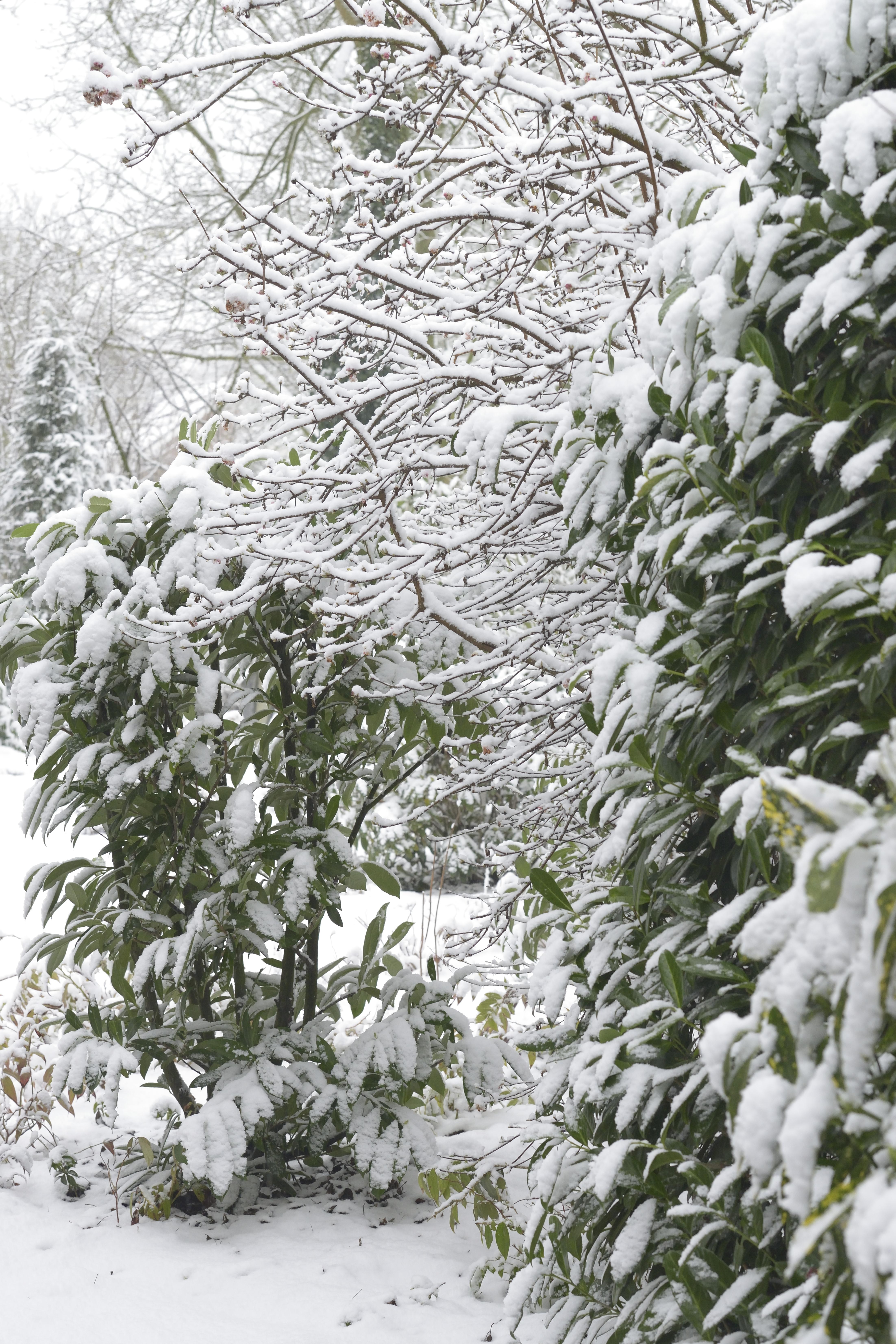 Sneeuw in Hengelo januari 2015
