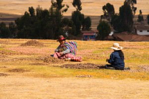 Women drying and sorting potatoes